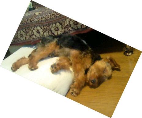 sleeping nicolas